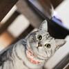 ネコの健康管理、AI の手も借りたい シャープ製トイレ