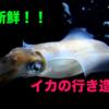 『呼子』主が☆おすすめ☆する2店舗!!新鮮なイカを食べませんか??【萬坊】