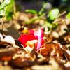 日差しの中に佇むは 椿の花よ心地よき