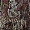 千年杉の樹皮
