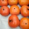 柿の収穫(1)