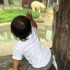 【1歳3ヶ月】2回目の上野動物園!