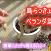島らっきょうの栽培にチャレンジ! ~ガジェットミョウガール07~