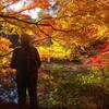 2016/11/16 紅黄に染まる@六甲森林植物園