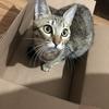 【猫ブログ】猫ちゃんの苦手な臭いとは。