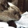 朝の猫さんと瞑想。【お知らせ:メールリーディング・ヒーリング セッション 】