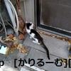 2018/12/09 猫ハナ(はな)写真 KIMG0247