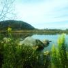 【宮城県の釣り39】 初心者・シーバス奮闘記→新ポイント探索に行ってみた。 【石巻~登米】