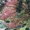 新池公園🍁🍁春日井市🍂で紅葉狩り🍁🍁 blogを続けてきて良かったこと  「日々、移り行く日本の季節を感じることができて、感動できる(^_-)-☆」これが一番かな?