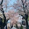 【おうち時間】運動不足の小学生を連れ出して桜トンネルへ