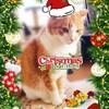 2019クリスマス☆飛び猫チャレンジ