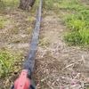 果樹栽培用の灌水チューブ「スミサンスイヨコトビ」