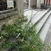 梛神社・神幸祭