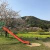 桜&菜の花🌸