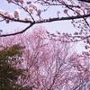 春景色スケッチ