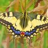 ポートフォリオ解説【ゴールデンバタフライ】黄金蝶でパフォーマンスを輝かせる