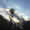 雲がもくもく (キラッ)💫