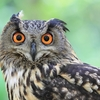 11/30の不安:小笠原鳥類の詩集をオススメしてみる