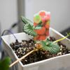 「さくらのIoT Platform β」でイチゴを育てる(2)