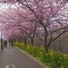 一足早く「桜」を見て来ました