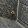 豊橋市で高所の蜂の巣を駆除!高額な高所作業料を取る業者には注意して!