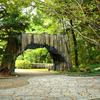 奈良県立馬見丘陵公園探索(6)大木のゲートとウッドデッキ風遊歩道