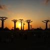 マダガスカル一人歩き#5バオバブ並木