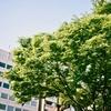 初夏から春・冬? 京都・オリンパス PEN EES-2