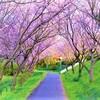 『つつじが岡公園 旧秋元別邸 十月桜』~アクセス・駐車場情報~