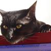 今日の黒猫モモ&白黒猫ナナの動画ー722