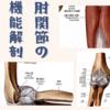 肘関節の機能解剖