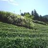 草刈りビフォー・アフター