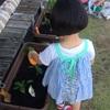 家庭菜園はじめました。