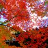 【超穴場の紅葉スポット】京都府八幡市の「もみじ寺」善法律寺の紅葉ライトアップ情報