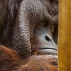 OLYMPUS OM-D E-M5 MarkIIで動物園撮影