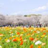 喜多見のカーシェアで行く桜の名所-昭和記念公園!