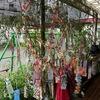 たんぽぽこどもの園の七夕.    Tanabata. Milchstrasse Fest im Kindergarten