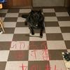 甲斐犬サンの「サカリのついたメス犬言うなぁッ」の巻〜マヂデ━Σ(゚Д。ノ)ノ━!!?