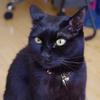 今日の黒猫モモ&白黒猫ナナの動画ー920