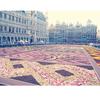 ブリュッセルで行われる花の祭典・フラワーカーペット2012に行ってきた