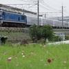 通達276 「 甲124 JR北海道 261系気動車の甲種輸送を狙う 」