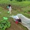 2019.7 夏野菜と虫取り籠