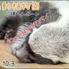 【レポ#10】ラーテルって知ってる?東山動植物園現地レポート(2020/10/03)【動物園】