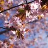 鳥取砂丘観光ついでに行きたい2017年4月の鳥取砂丘周辺イベント
