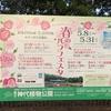 神代植物公園 2018年春のバラフェスタのお誘い 5月4日(みどりの日)は無料開園です。