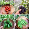 夏野菜、収穫の途中結果!