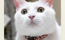 ネコ英語「かわいいお顔で訴える」