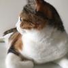 【愛猫日記】毎日アンヌさん♯1