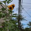 神戸の夏景色