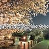 1人花見に行ってきたんよ(΄◉◞౪◟◉`)桜サイクリング☆僕街☆